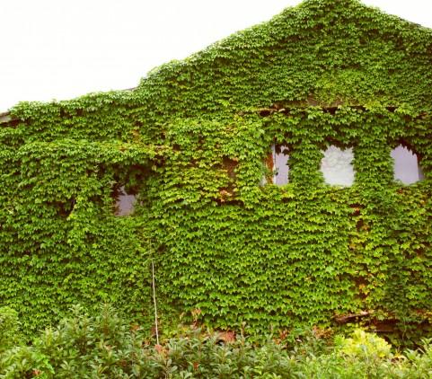 おしゃれに見えるつたに覆われた家の風水は?