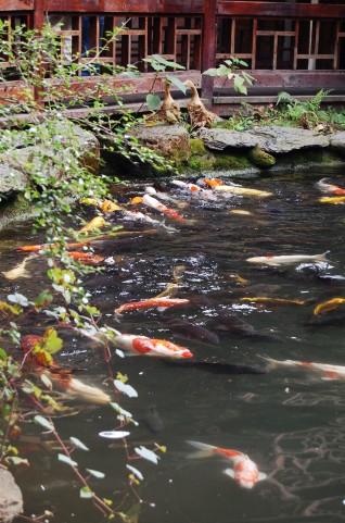 魚で運気を改善する方法とは?