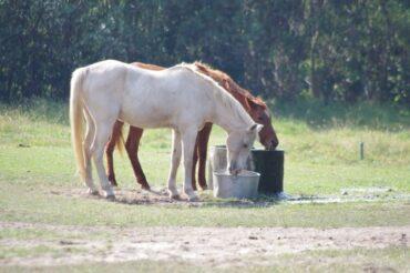 馬がつく女性は自由すぎて・・