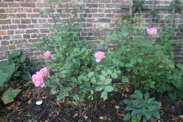 風水と庭の関係